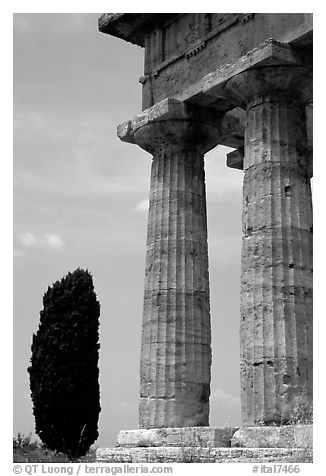 Cypress and columns of Doric Greek Temple of Neptune. Campania, Italy (black and white)