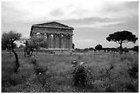 Wildflowers and Temple of Neptune. Campania, Italy (black and white)