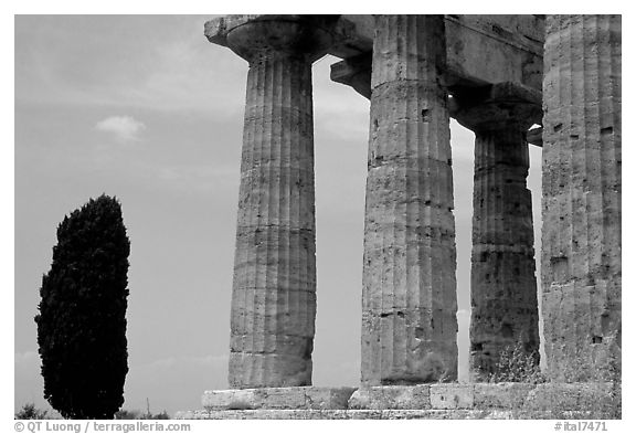 Cypress and Doruc columns of  Temple of Neptune. Campania, Italy (black and white)
