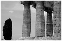 Cypress and Doruc columns of  Temple of Neptune. Campania, Italy ( black and white)