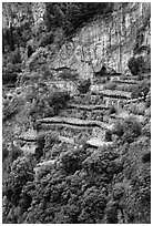 Cliffs and hillside terraces cultivated with lemons. Amalfi Coast, Campania, Italy ( black and white)