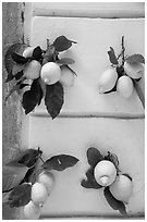 Lemons and wall. Amalfi Coast, Campania, Italy ( black and white)