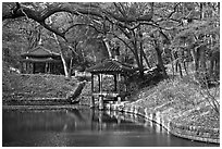 Pond in autumn, Changdeokgung Palace gardens. Seoul, South Korea ( black and white)