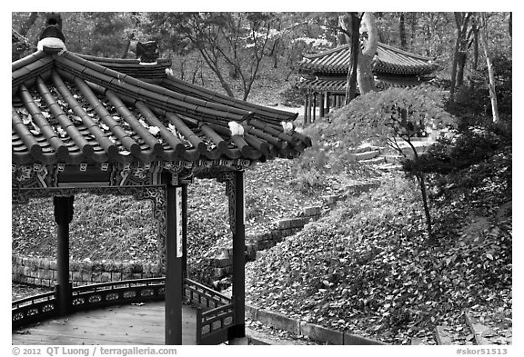 Pavilions in autumn, Changdeok Palace gardens. Seoul, South Korea (black and white)