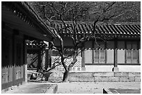 Jeongsa-cheong, Jongmyo royal ancestral shrine. Seoul, South Korea ( black and white)