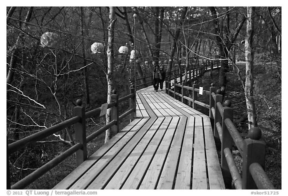 Elevated boardwalk near Haeinsa. South Korea (black and white)