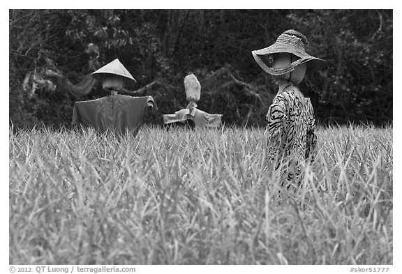 Scarecrows in field. Hahoe Folk Village, South Korea (black and white)