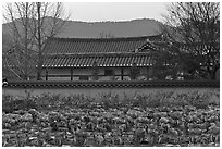 Cabbage field and residence. Hahoe Folk Village, South Korea ( black and white)