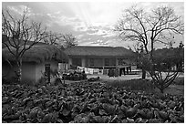 Cabbage field and rural house at sunset. Hahoe Folk Village, South Korea ( black and white)