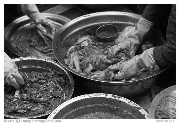 Hands seen mixing kim chee. Gyeongju, South Korea (black and white)