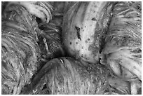 Kimchee made of napa cabbage. Gyeongju, South Korea ( black and white)
