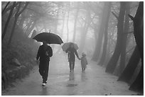 Family walking on path in the rain, Seokguram. Gyeongju, South Korea ( black and white)