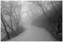 Path in fog, Seokguram. Gyeongju, South Korea ( black and white)