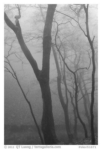 Trees in fog, Seokguram. Gyeongju, South Korea