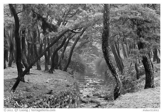 Landscaped stream in forest, Mt Namsan. Gyeongju, South Korea (black and white)