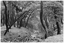 Landscaped stream in forest, Mt Namsan. Gyeongju, South Korea ( black and white)