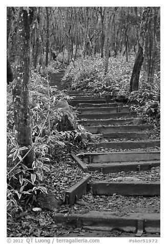 Steps of Eorimok trail, Hallasan National Park. Jeju Island, South Korea (black and white)