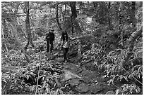 Hikers on Eorimok trail, Mt Halla. Jeju Island, South Korea (black and white)