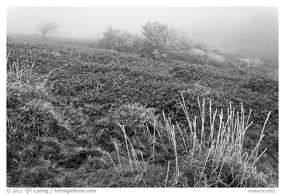 Sajebi Hill in fog, Hallasan National Park. Jeju Island, South Korea (black and white)