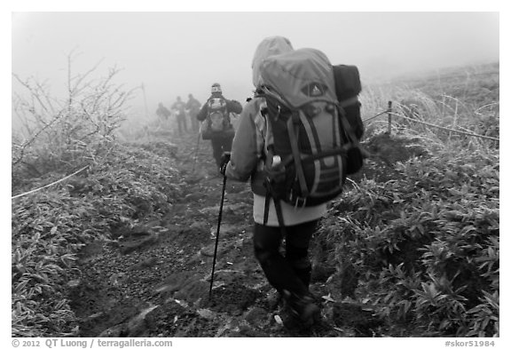 Backpackers on trail in fog, Hallasan. Jeju Island, South Korea (black and white)
