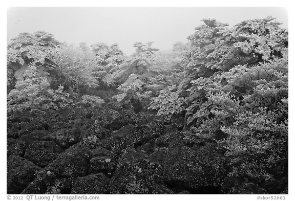 Rocks and ice-covered forest, Hallasan. Jeju Island, South Korea (black and white)