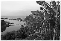 Banana tree and harbor, Seogwipo-si. Jeju Island, South Korea ( black and white)