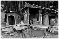 Spirit houses and banyan tree. George Town, Penang, Malaysia (black and white)