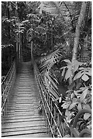 Suspended boardwalk, forest reserve. Kuala Lumpur, Malaysia ( black and white)