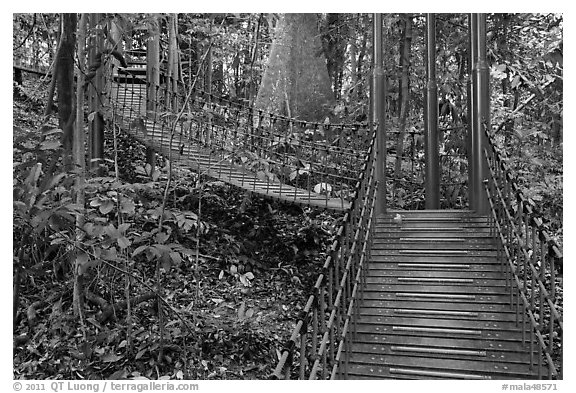Boardwalk in dipterocarp forest reserve. Kuala Lumpur, Malaysia (black and white)