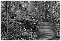 Boardwalk in dipterocarp forest reserve. Kuala Lumpur, Malaysia ( black and white)