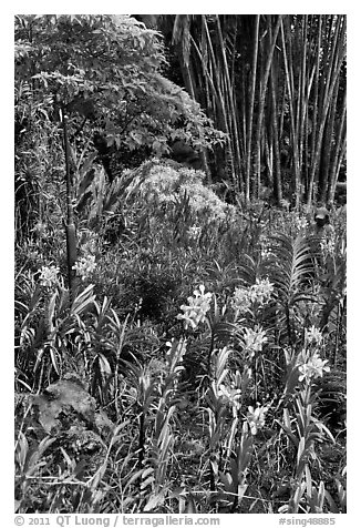 Orchids and bamboo, National Orchid Garden. Singapore (black and white)