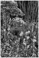 Orchids and bamboo, National Orchid Garden. Singapore ( black and white)