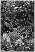 National Orchid Garden, in Singapore Botanical Gardens. Singapore ( black and white)