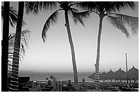 Outdoor dining under palm trees at sunset, Nuevo Vallarta, Nayarit. Jalisco, Mexico ( black and white)