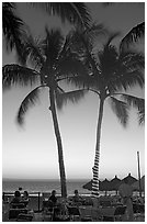 Outdoor restaurant with palm trees at sunset, Nuevo Vallarta, Nayarit. Jalisco, Mexico (black and white)