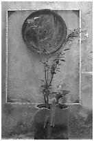 Potted plant and decorative platter on a wall, Puerto Vallarta, Jalisco. Jalisco, Mexico (black and white)