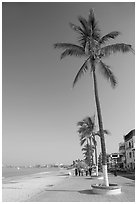 Palm trees on the Malecon, morning, Puerto Vallarta, Jalisco. Jalisco, Mexico ( black and white)