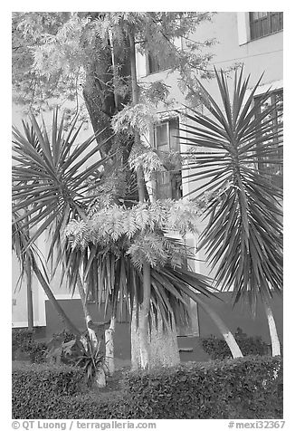 Vegetation and houses in  Jardin de la Reforma. Guanajuato, Mexico (black and white)
