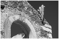 Cactus growing out of ruined house. Guanajuato, Mexico (black and white)