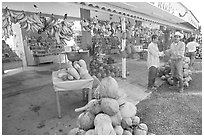 Roadside fruit stand. Mexico (black and white)