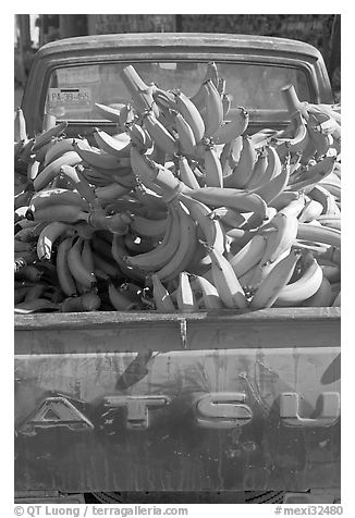 Bananas in the back of a pick-up truck. Mexico (black and white)
