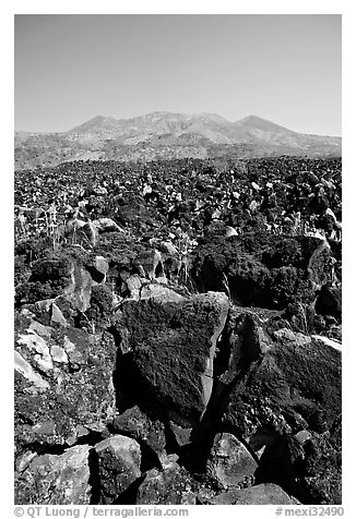 Hardened lava field. Mexico (black and white)