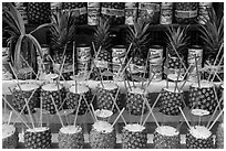 Pinacoladas prepared in pineapple shells. Baja California, Mexico ( black and white)