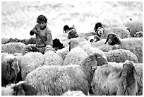 Bedouin girl feeding water to a hard of sheep, Judean Desert. West Bank, Occupied Territories (Israel) ( black and white)