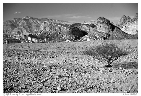 Bush and colorful cliffs. Negev Desert, Israel (black and white)