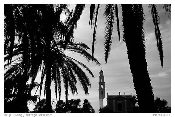 Palm tree and tower, Jaffa, Tel-Aviv. Israel (black and white)
