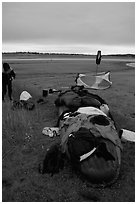 Gear laid out for drying on the bottom of the canoe on a small island of the Kobuk River. Kobuk Valley National Park, Alaska (black and white)