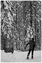 Hiker on snowshoes entering Tuolumne Grove in winter. Yosemite National Park, California (black and white)