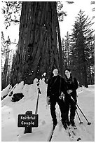 Skiers in front of the tree named Faithful couple tree in winter. Yosemite National Park, California (black and white)