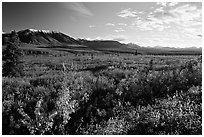 Alaska Range and tundra from near Savage River. Denali National Park, Alaska, USA. (black and white)